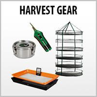 cat-four-button-harvest.jpg